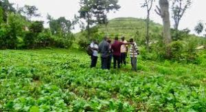 Universities That Offer Agricultural Extension In Nigeria: Nigerian Schools Offering Agricultural Extension.