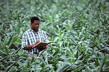 Universities That Offer Agronomy In Nigeria: Nigerian Schools Offering Agronomy